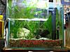 Aquarium051
