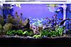 Aquarium144_s